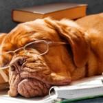 Angela-Braun-Tuechler | Dog Fell Asleep